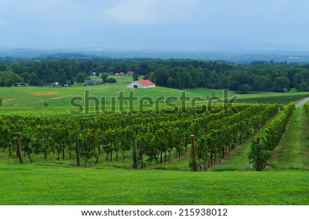 Vineyard with a view on the valley - stock photo