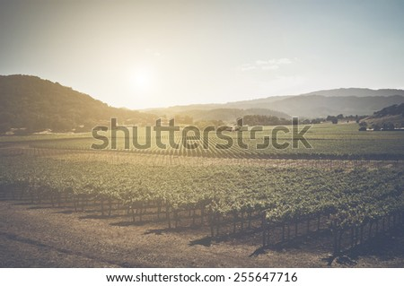 Vineyard with Blue Sky in Autumn with Vintage Instagram Film Style Filter - stock photo