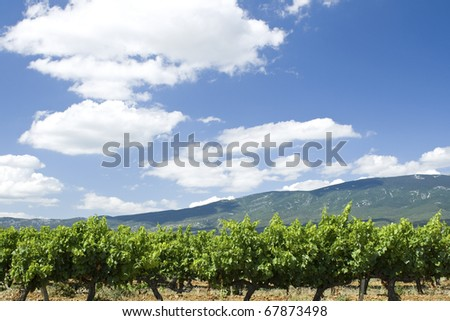 Vineyard, with mountains in the background. Provence. France.