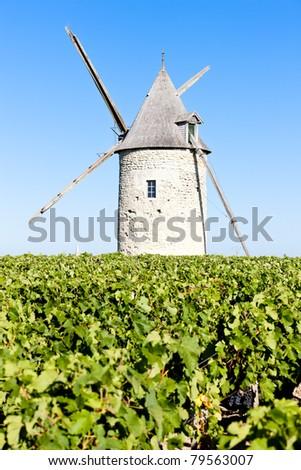 vineyard with windmill near Blaignan, Bordeaux Region, France - stock photo