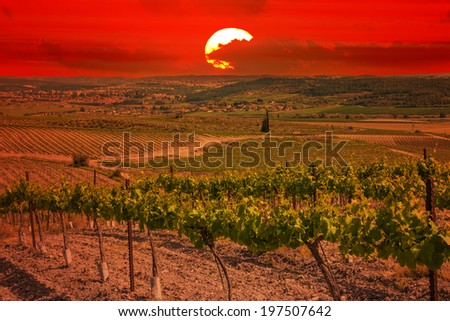 Vineyards agriculture valley at sunset. Mediterranean landscape - stock photo