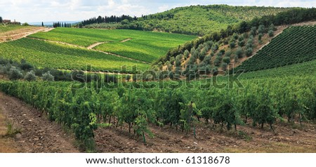 Vineyards and olive tree plantations over hills at Chianti, Italy.