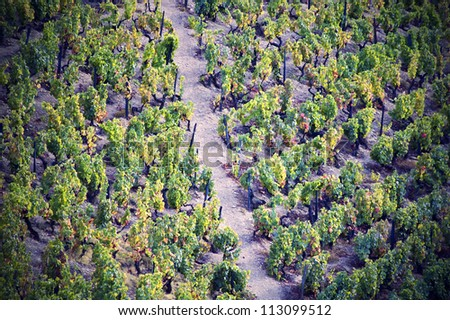 Vineyards and panoramic views of Douro Valley, Portugal - stock photo