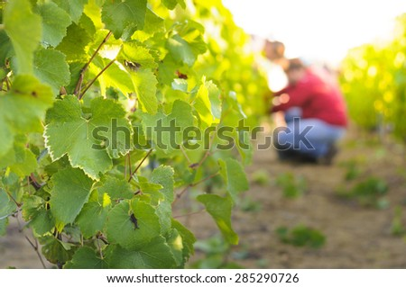 Vineyards and sunny day, France - stock photo