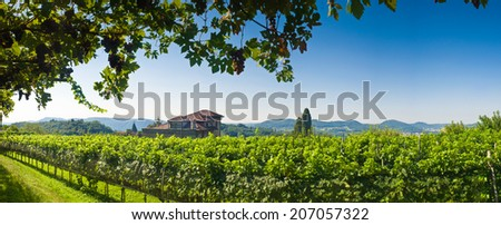 Vineyards and Vistas. Blue sky and rustic farmland. Far misty mountains, Italy. - stock photo