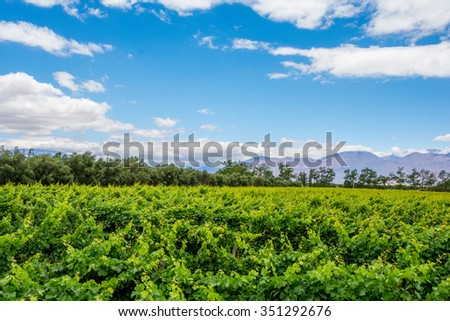 vineyards Argentina