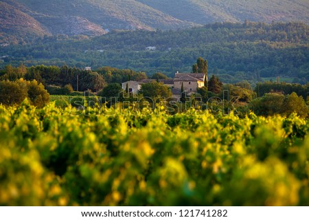 Vineyards around Lacoste and Bonnieux villages, Luberon, Provence, France