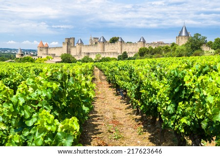 vineyards in Carcassonne, France - stock photo