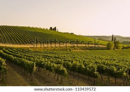Vineyards in Chianti Region in Tuscany - Italy - stock photo