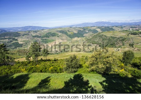 Vineyards in Douro Valley, Portugal, Portuguese port wine - stock photo