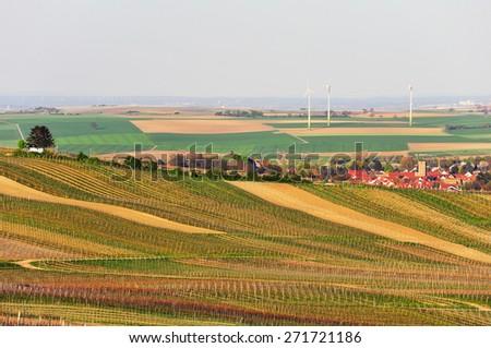 Vineyards in Germany. - stock photo