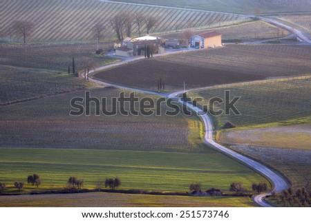 Vineyards in Italy - stock photo