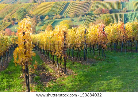 Vineyards in Kraichgau/Germany - stock photo