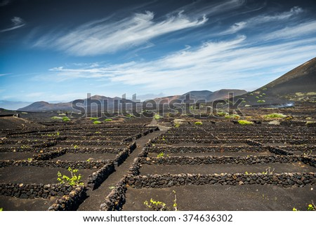 Vineyards in La Geria, Lanzarote, canary islands, Spain