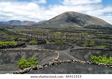 Vineyards in La Geria, Lanzarote, canary islands, Spain.
