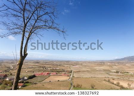 Vineyards in La Rioja, Spain - stock photo