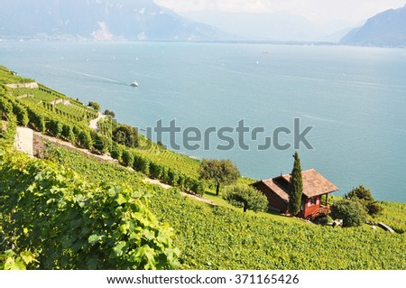 Vineyards in Lavaux against Geneva lake, Switzerland   - stock photo