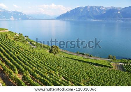 Vineyards in Lavaux region, Switzerland - stock photo