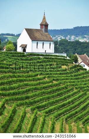 Vineyards in Rheinau, Switzerland - stock photo