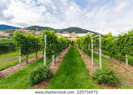 Vineyards in rows with a house and blue sky in Canada, Osoyoos - stock photo