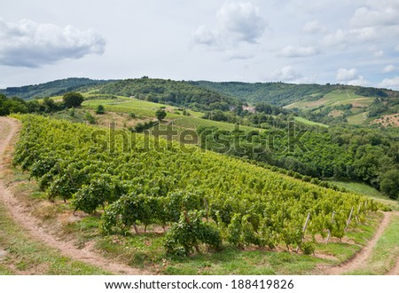 Vineyards in the famous wine making region of Beaujolais, France - stock photo