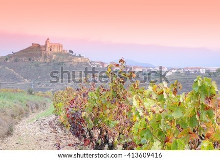 Vineyards in the province of La Rioja in Spain.