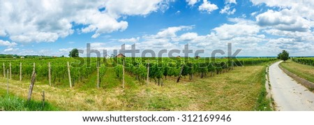 Vineyards in Villány wine region, Hungary, summer of 2015. On the left Blauer Portugeiser, on the right Blaufränkisch (blue Frankish) - stock photo