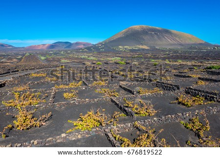 Vineyards in Volcanic Landscape on Lanzarote, Canary Islands, Spain