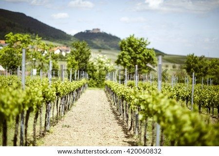 Vineyards near Maikammer in Rhineland-Palatinate in Spring with Hambach Palace in the Background - stock photo