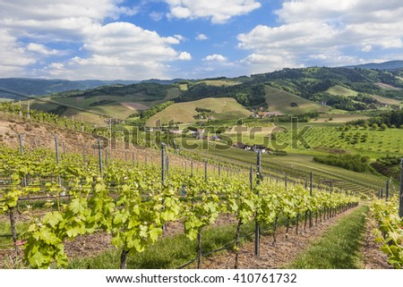 Vineyards near Oberkirch, Ortenau, Black Forest, Germany