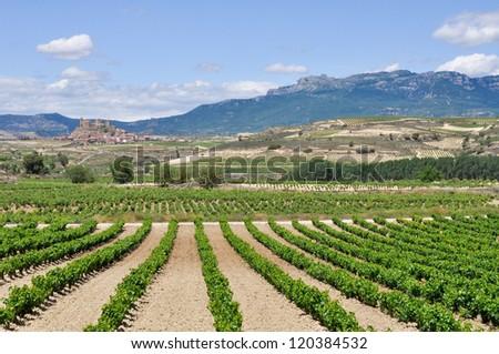 Vineyards near San Vicente de la Sonsierra, La Rioja (Spain) - stock photo