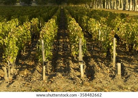 Vineyards of Margaux, Bordeaux - stock photo