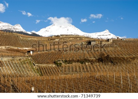 Vineyards on a steep hillside, Switzerland