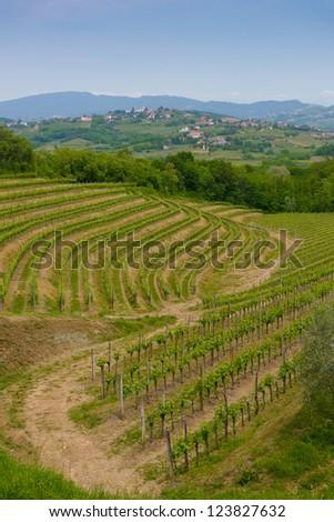 Vineyards on the hills in Collio area near Cormons, in the wine region of Friuli, Italy - stock photo
