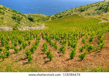 Vineyards, southern coast of Hvar island, west of Sveta Nedjelja, Croatia - stock photo