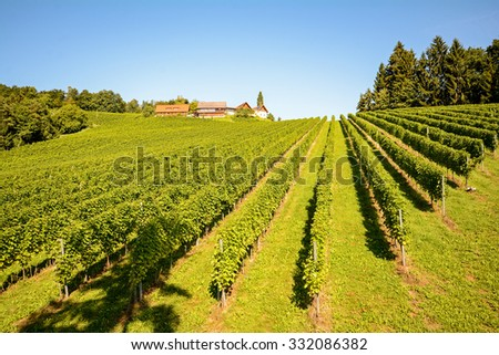 Vineyards with winery in autumn - White wine grapes before harvest, Southern Styria Austria - stock photo