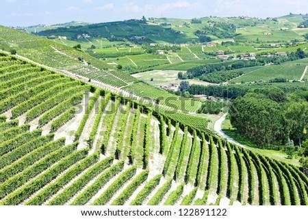 vineyars near Barbaresco, Piedmont, Italy - stock photo