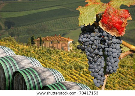 Vineyeard in Chianti, Toscany, Italy, famous landscape - stock photo