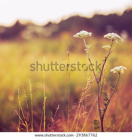 vintage autumn field background - stock photo