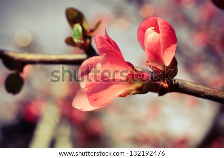 Vintage background of spring blossom of flowers - stock photo