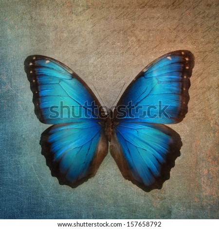 Vintage background with blue butterfly - stock photo