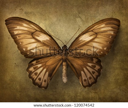 Vintage background with brown butterfly - stock photo