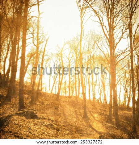 Vintage bare trees in sepia tones - stock photo