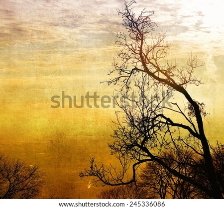 Vintage bare trees in sunset - stock photo