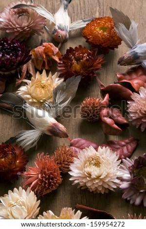Vintage birds background - stock photo
