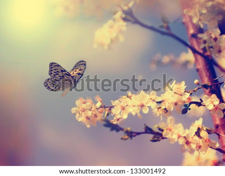 Vintage butterfly and cherry tree flower in spring - stock photo