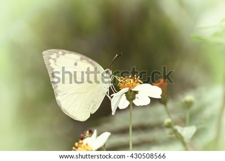 Vintage butterfly. Antique style photo of butterfly on flower  - stock photo