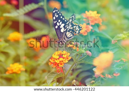 Vintage butterfly. Antique style photo of butterfly on flower .effect color filter.blur and noise - stock photo