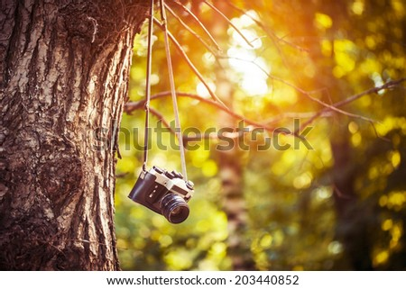 vintage camera hanging on a tree in park - stock photo