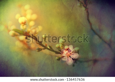 Vintage cherry blossom. Antique style photo of tree flowers with grunge old paper pattern. - stock photo